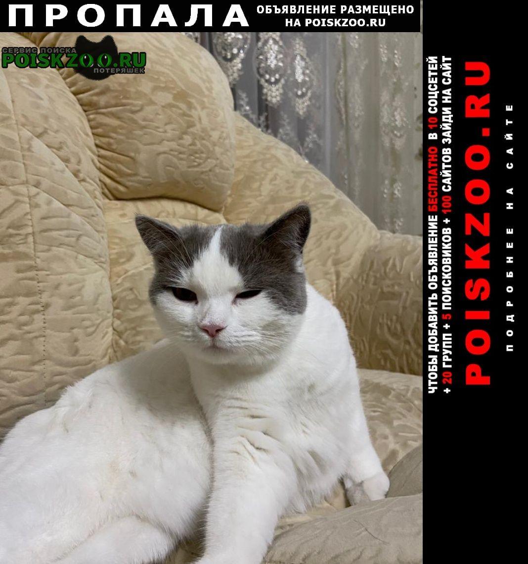 Пропала кошка ищем кошку по имени джема Шортанды