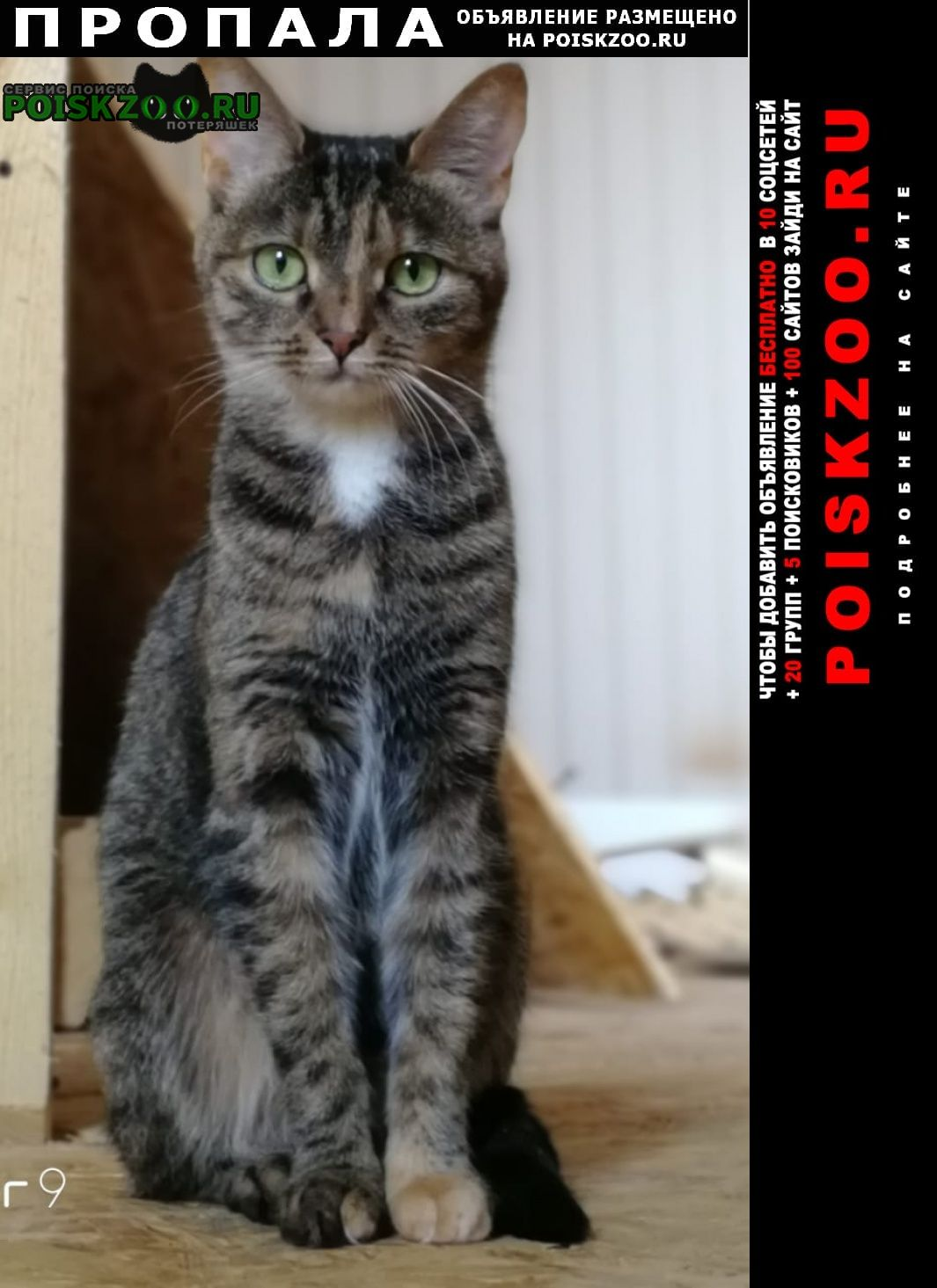 Пропала кошка срочно нужна помощь Санкт-Петербург