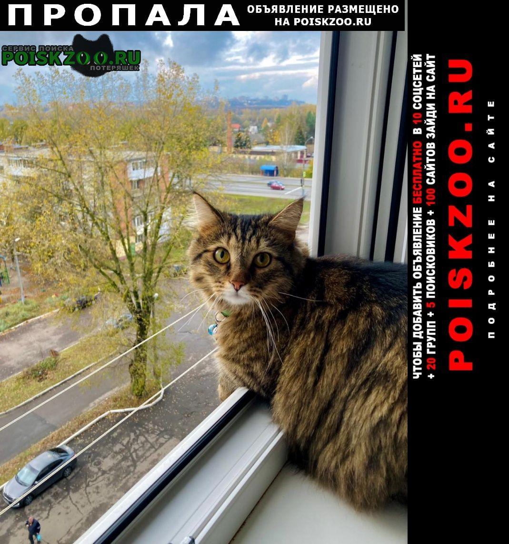 Москва Пропала кошка умоляю, помогите найти друга