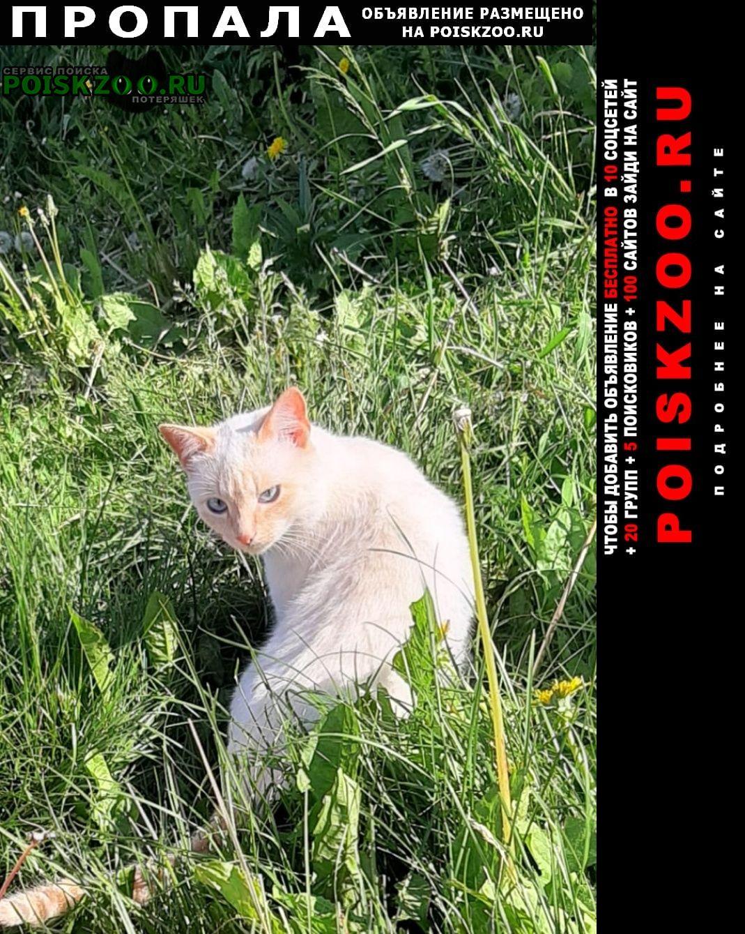 Пропал кот Мамадыш