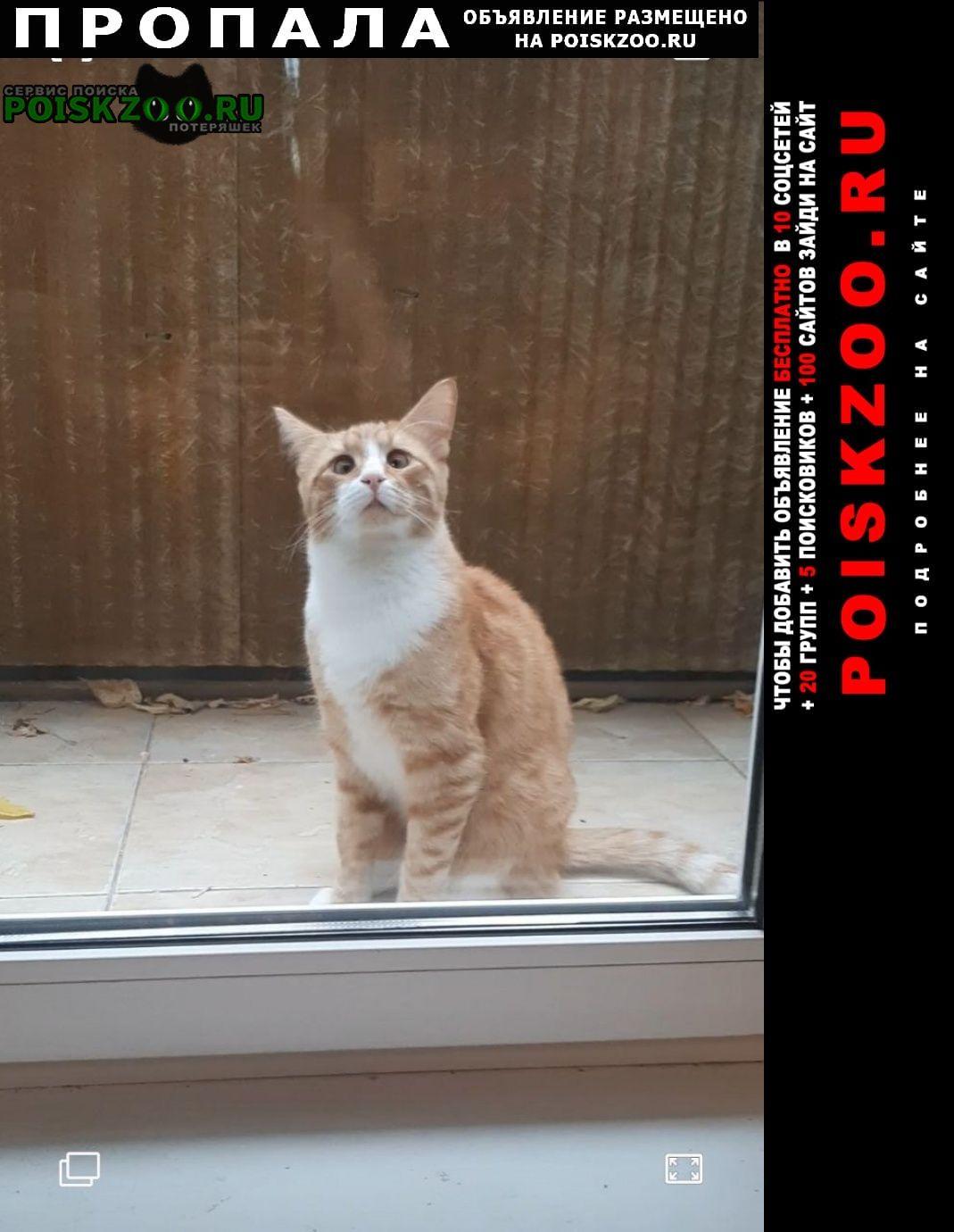 Пропала кошка рыжий кот Кимры