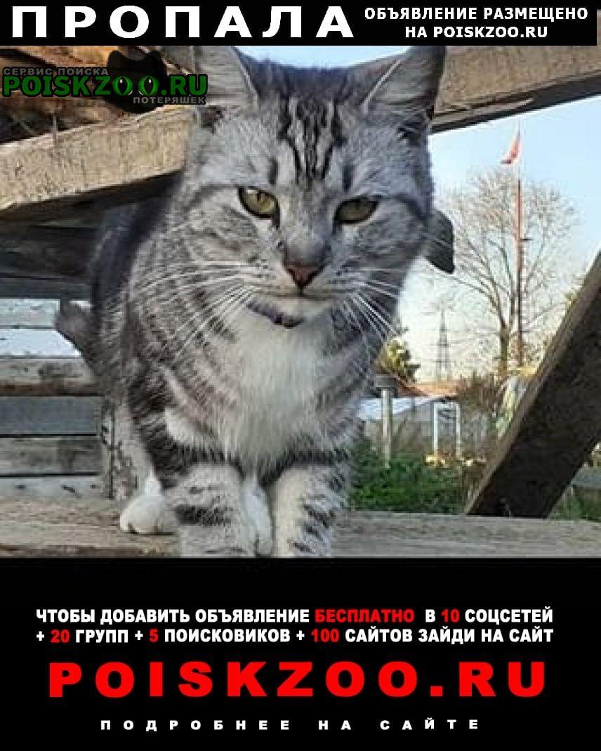 Пропала кошка Южно-Сахалинск