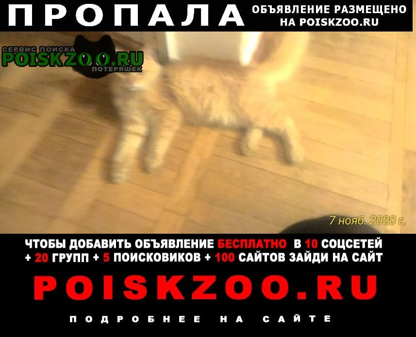 Найдена кошка кошку недавно искали Краснодар