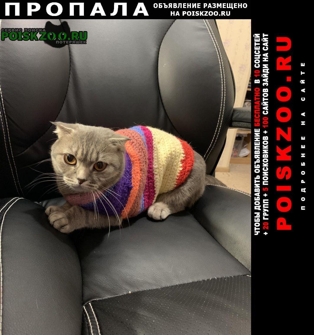Пропала кошка Сургут