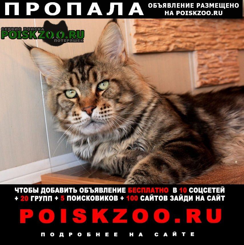 Вологда Пропала кошка