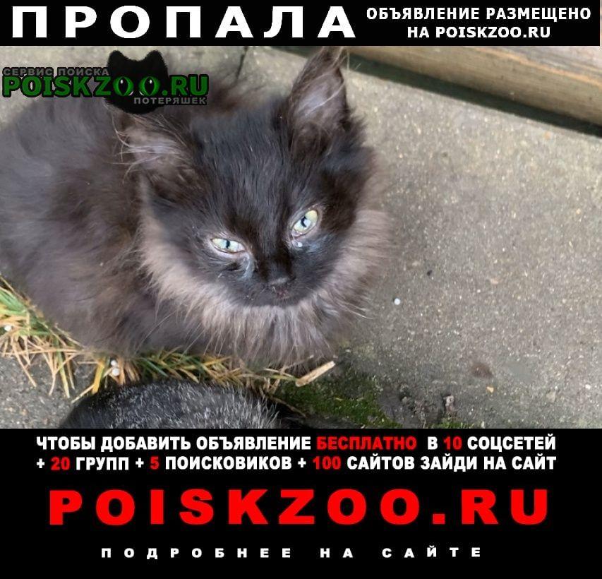 Пропала кошка чёрный котенок Рязань