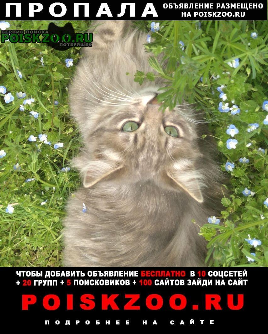 Пропала кошка кот жора Ставрополь