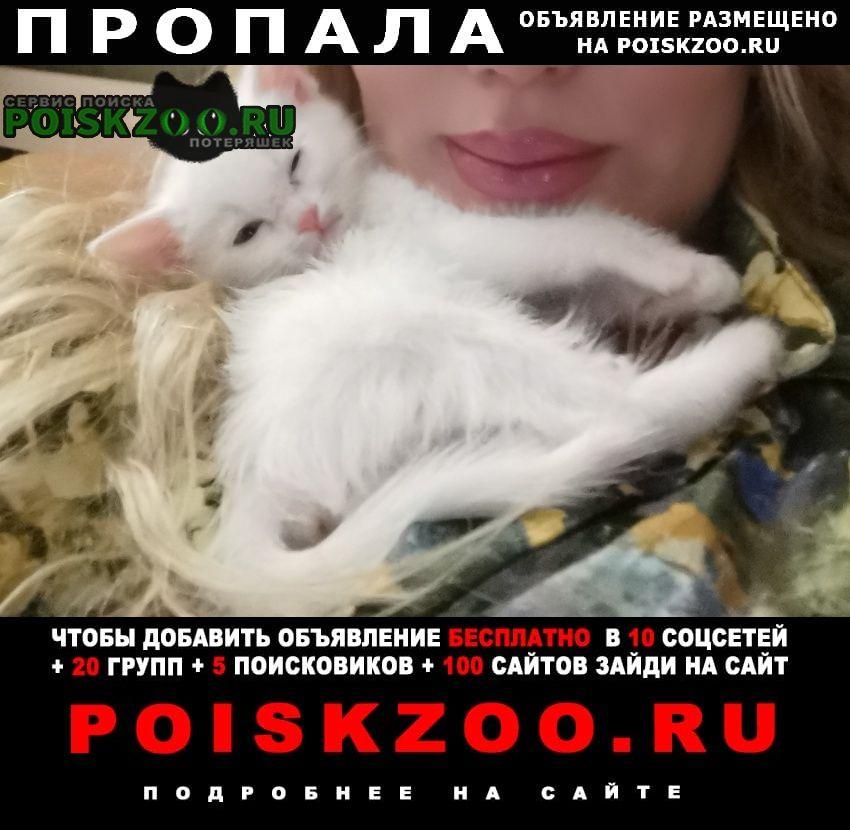 Пропала кошка Ноябрьск