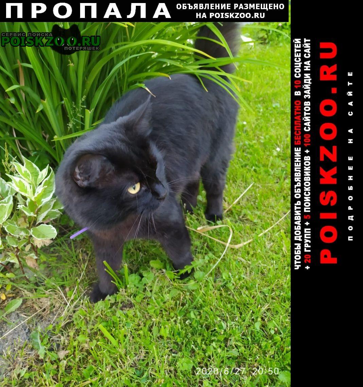 Пропал кот чёрный Домодедово