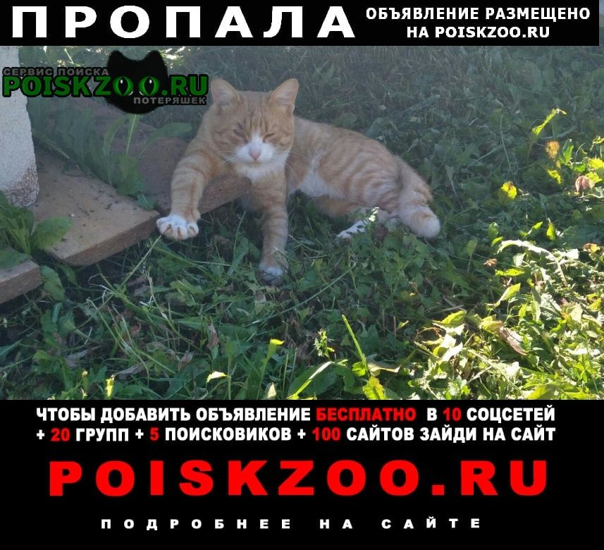 Пропала кошка кот татар базар Ижевск