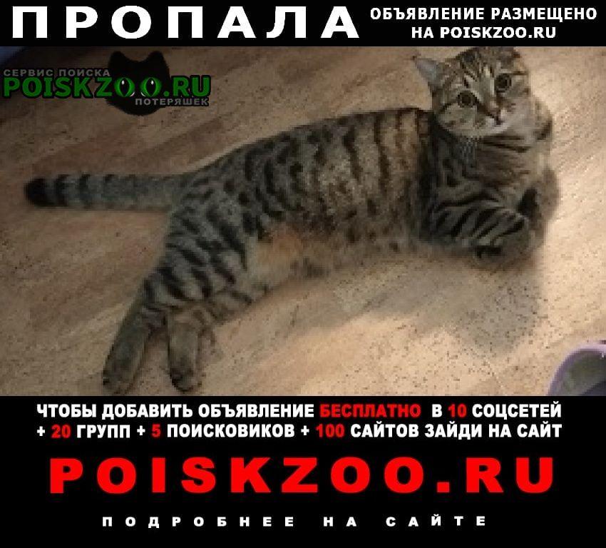 Пропала кошка джесси Уфа