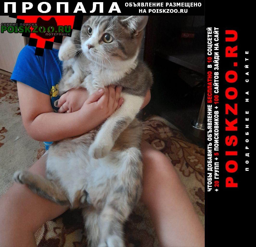 Пропала кошка котик Воронеж