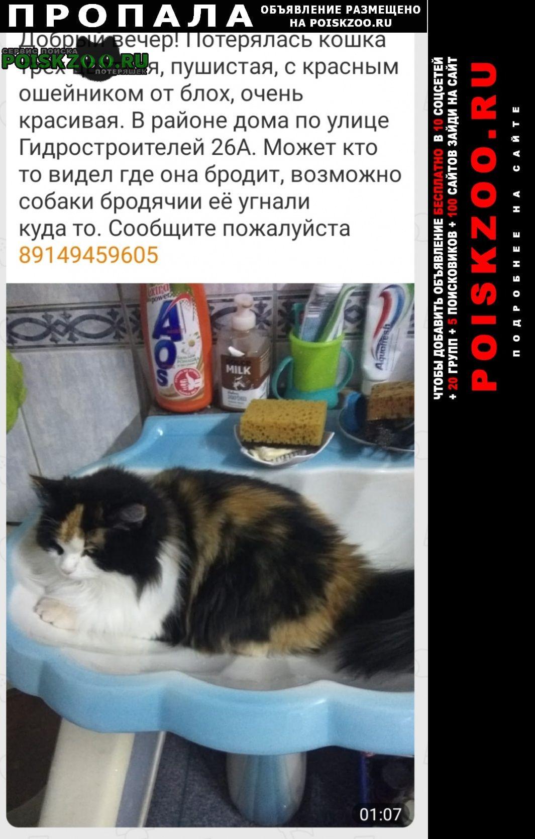 Пропала кошка Братск