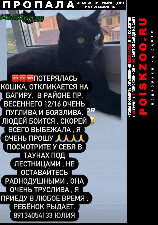 Пропала кошка Кемерово