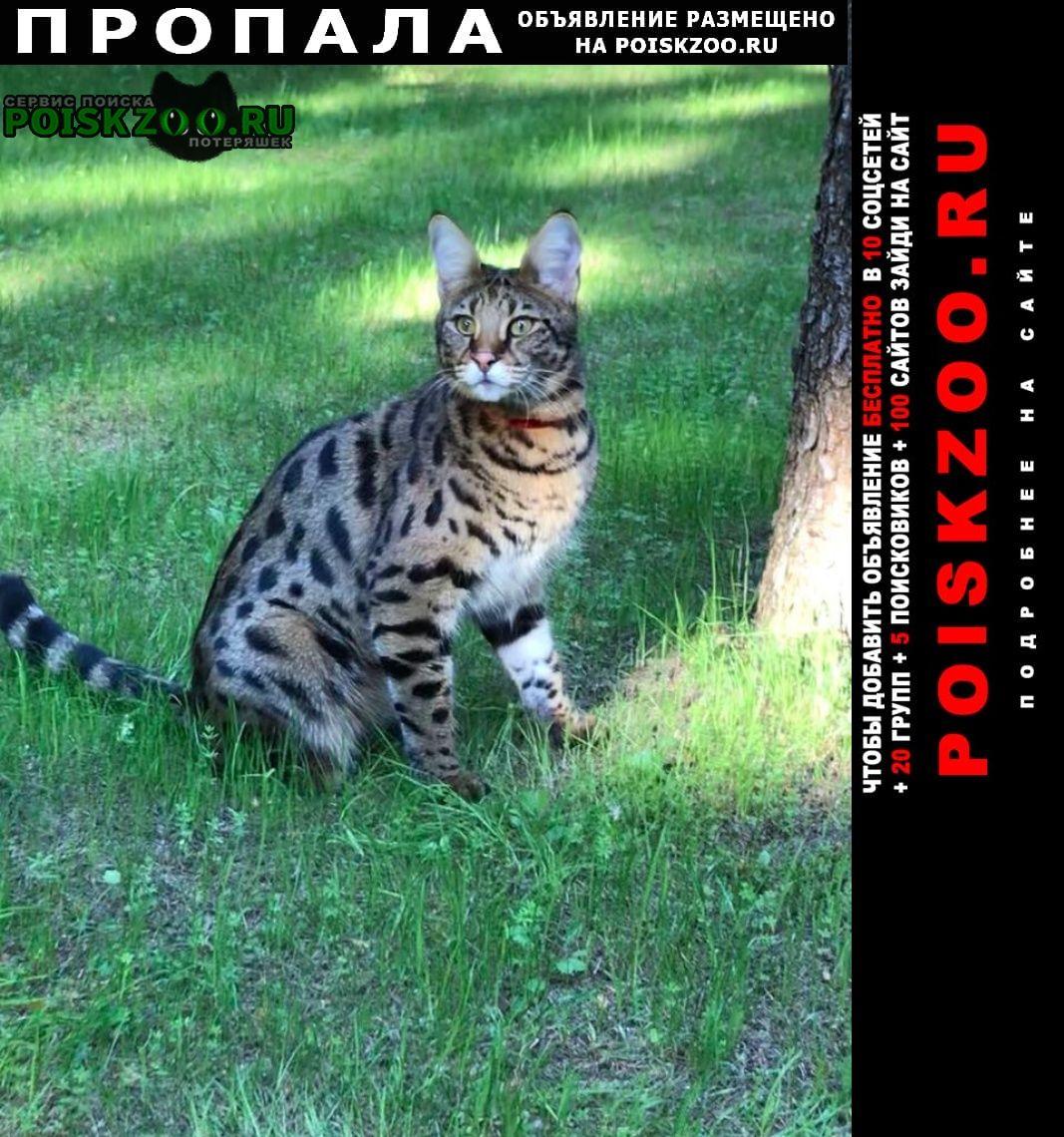Пропала кошка 03.11 из посёлка лесные дали-м, Одинцово