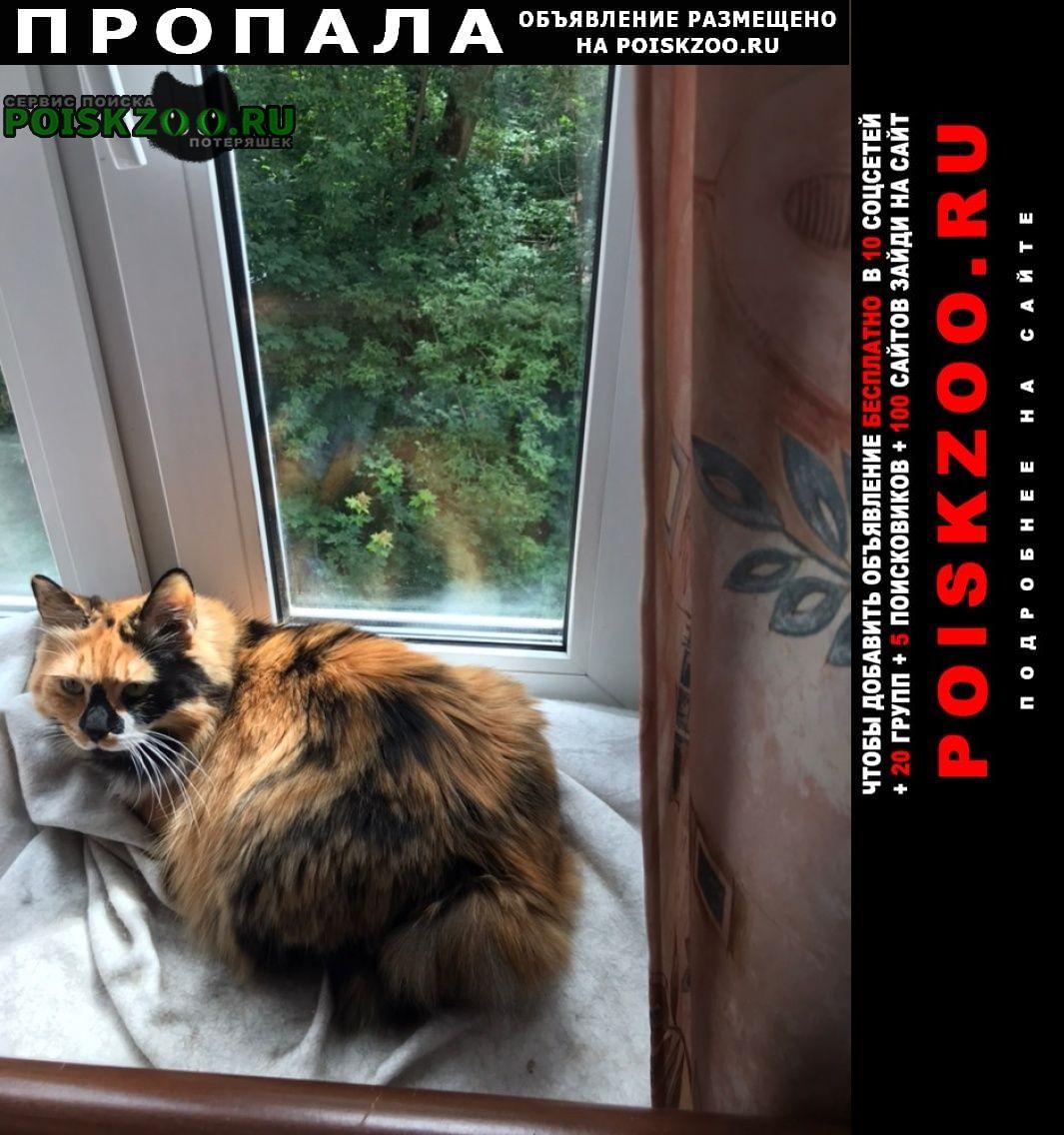 Пропала кошка Пушкино