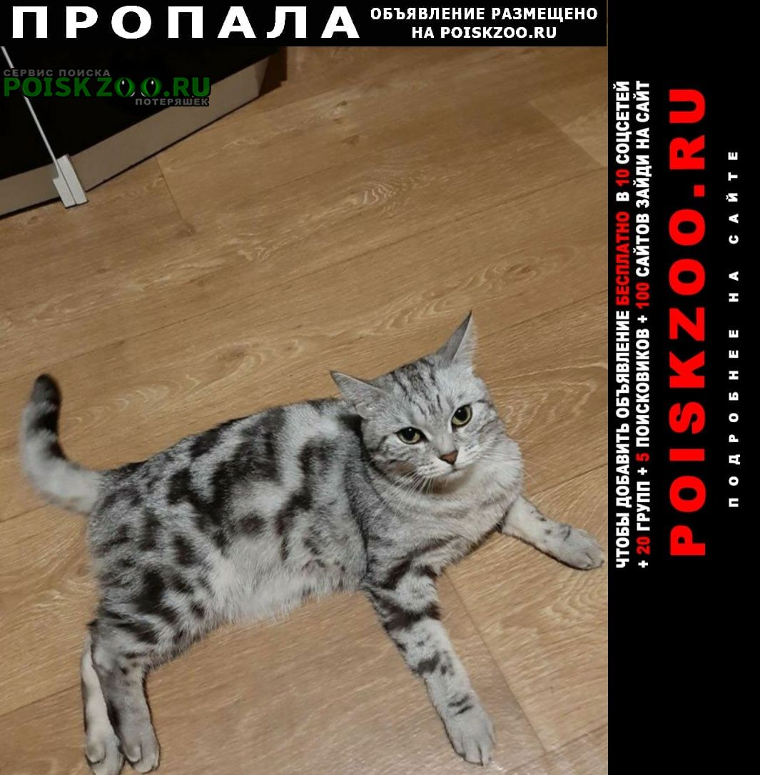 Пропала кошка Ишимбай