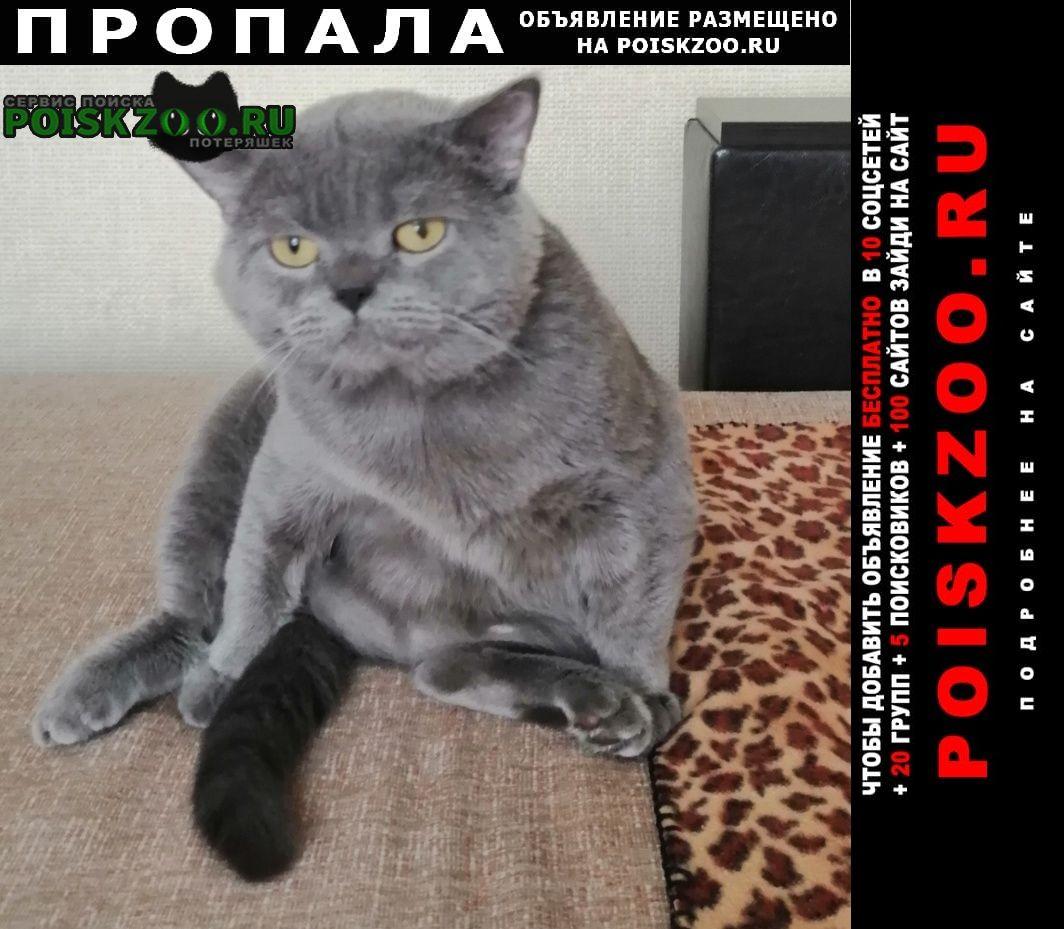 Пропала кошка вознаграждение Новочеркасск