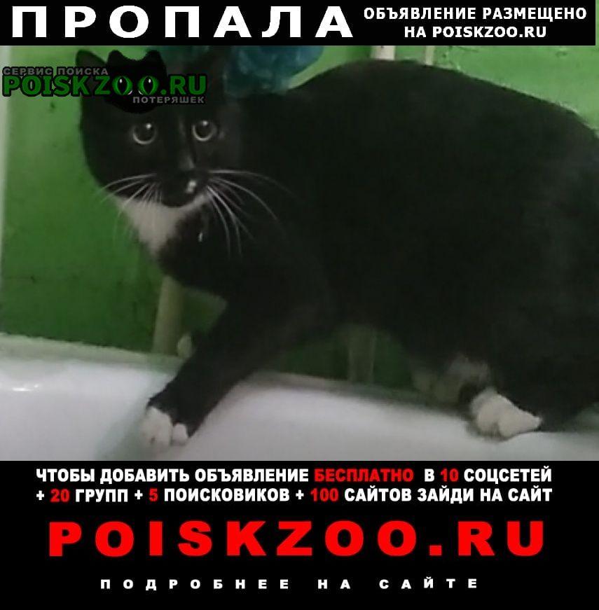 Пропала кошка кот на 26 км. Елизово (Камчатская обл.)