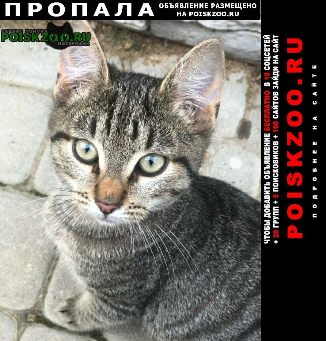 Москва Пропала кошка шпрота, коммунарка около клиники алвита