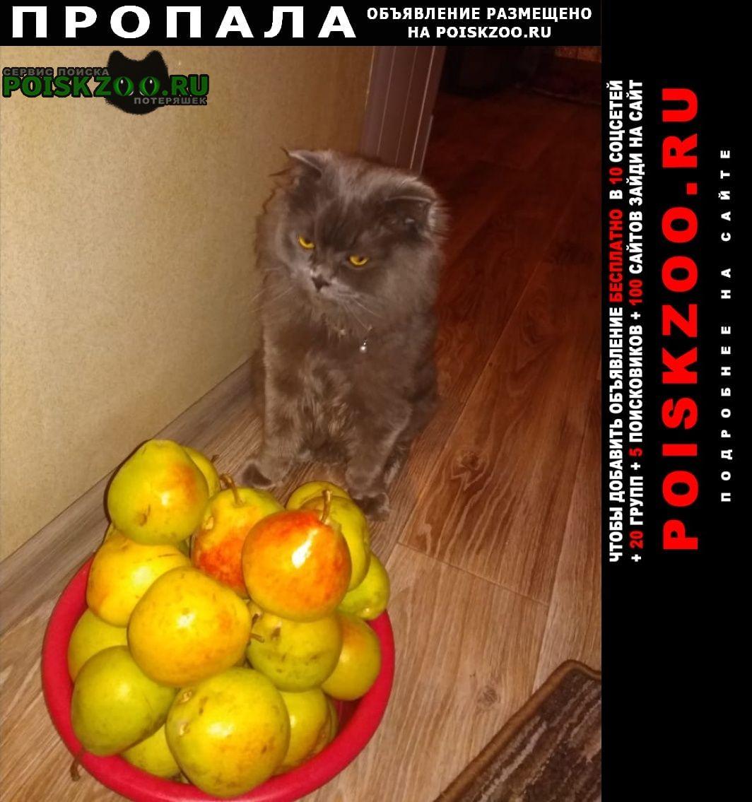 Пропала кошка возраст. 4года Алматы (Алма-Ата)