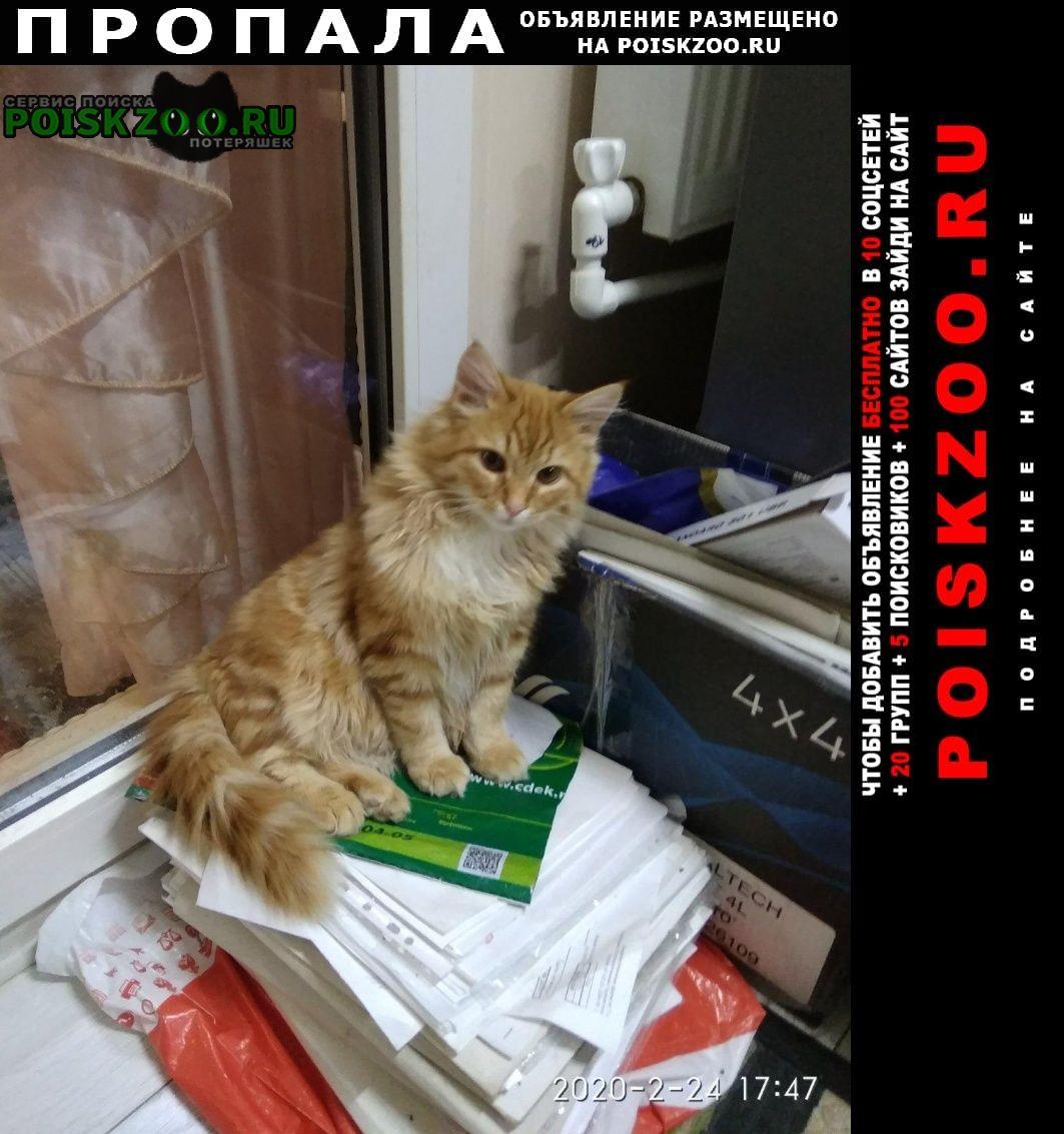 Пропал кот красивый рыжий марсик. Гвардейское Крым