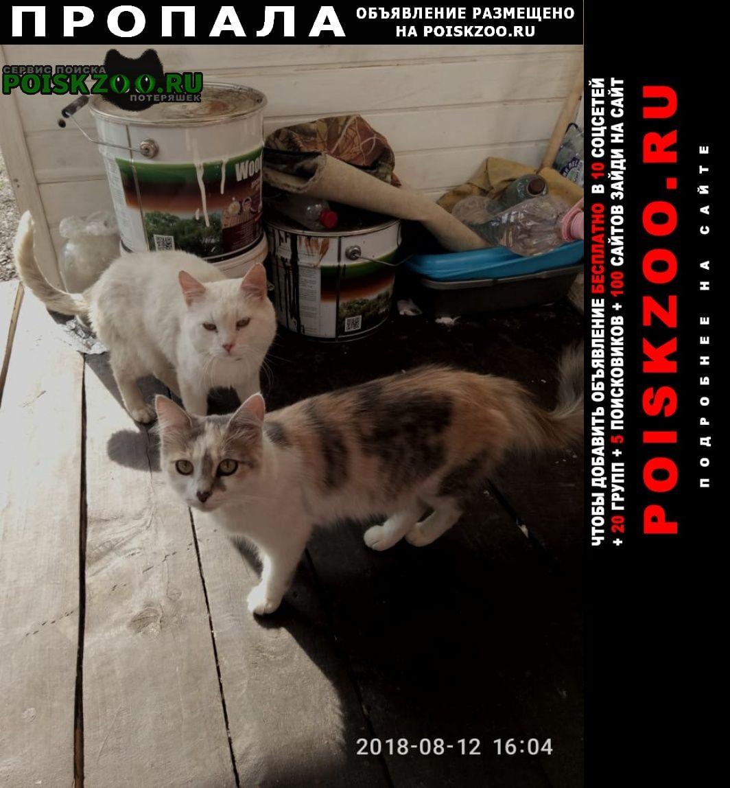 Москва Пропала кошка трехцветная