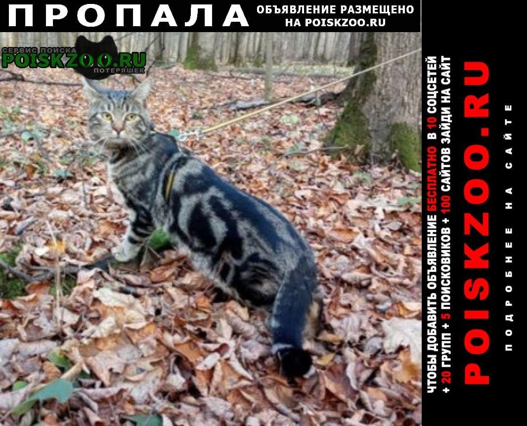 Пропала кошка кот м. тульская Москва