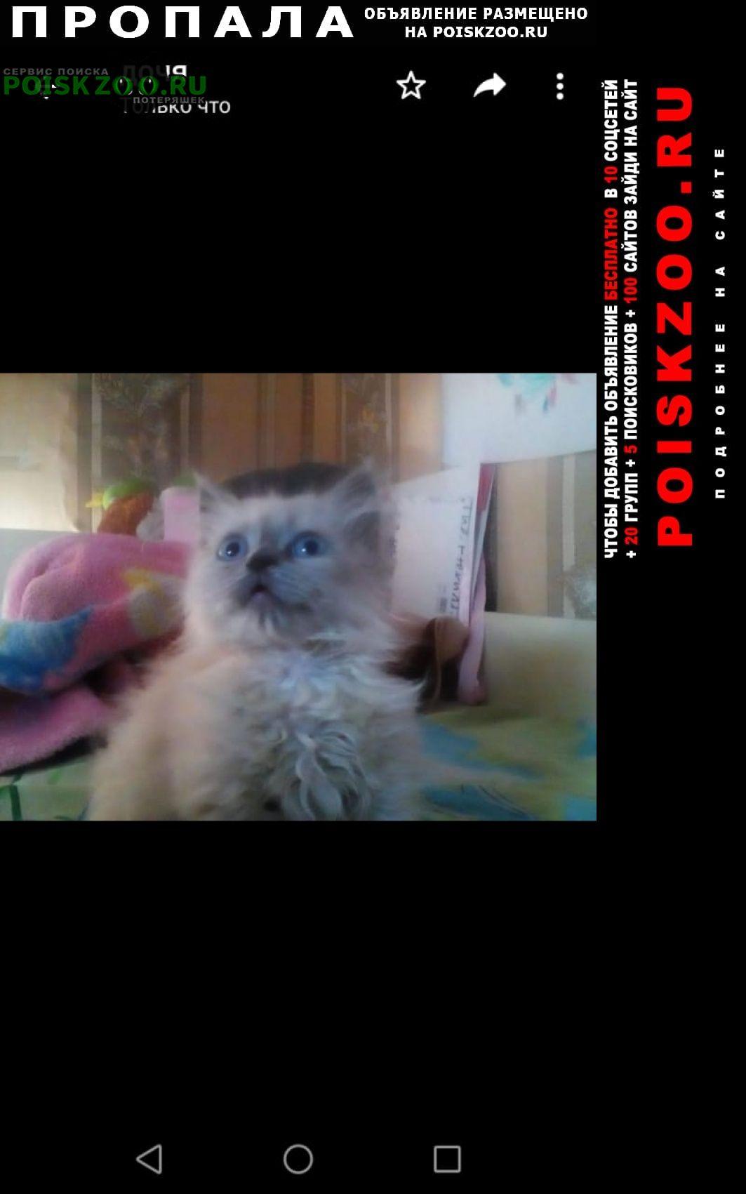 Пропал котёнок 3.мес Черкесск Карачаево-Черкесская Республика