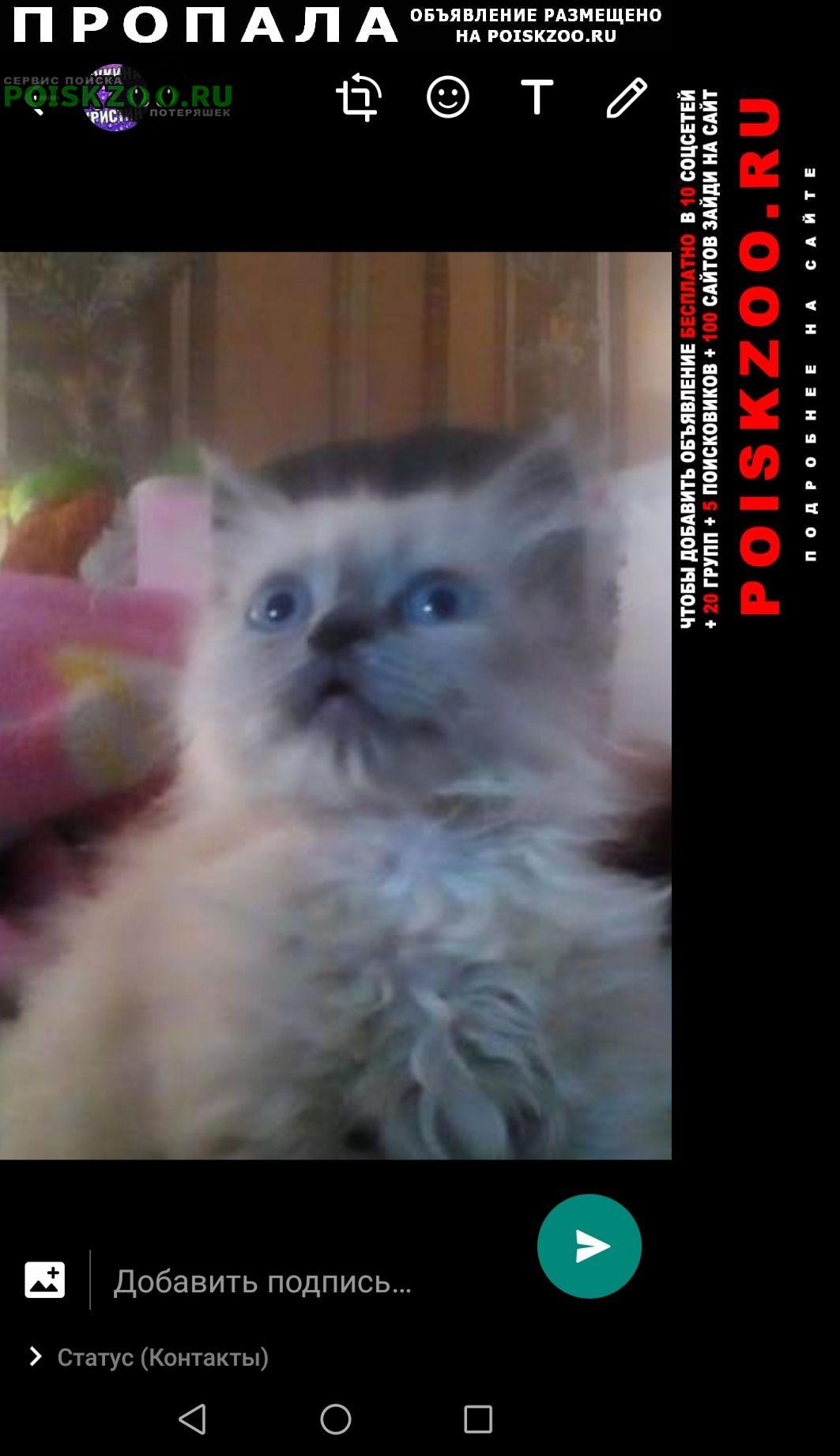 Пропала кошка котёнок 3 мес Черкесск Карачаево-Черкесская Республика