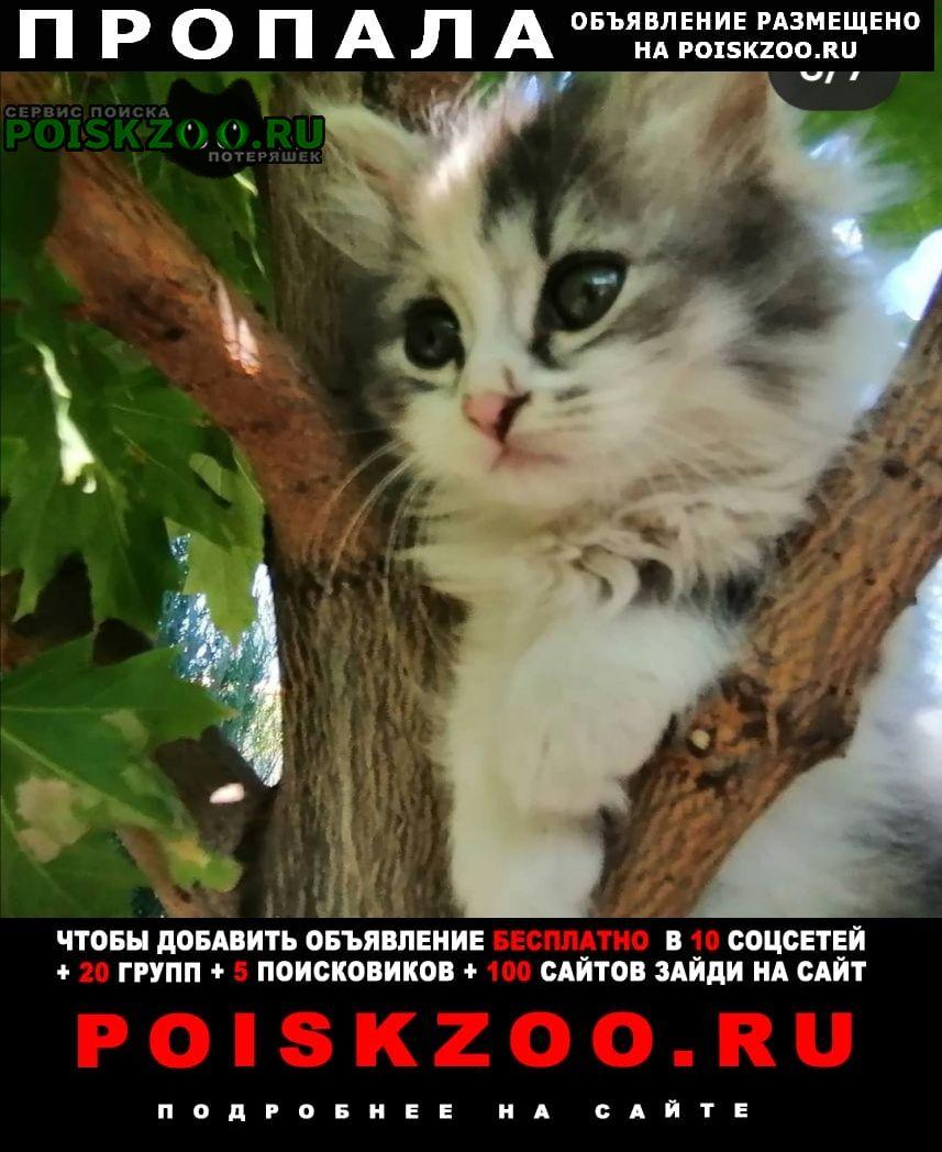 Пропала кошка котёнок. девочка трёх. Усть-Лабинск