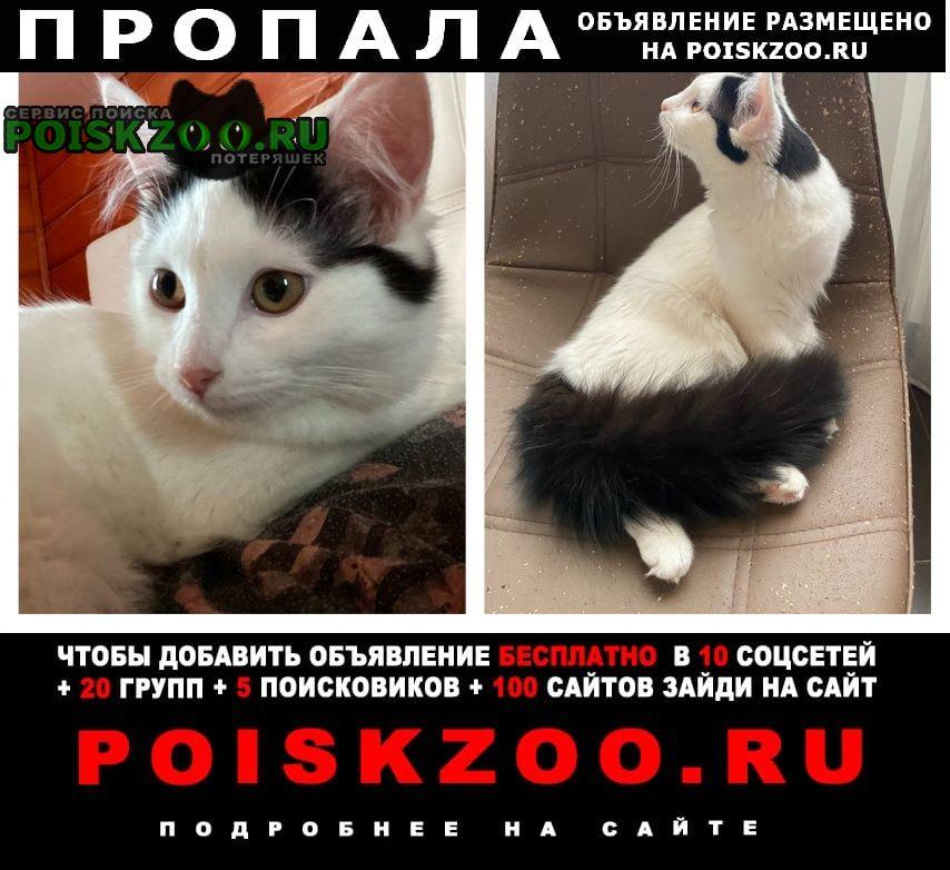 Пропала кошка Красногорск