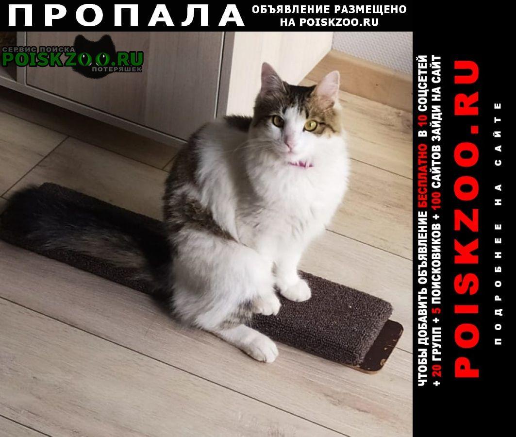 Саратов Пропала кошка
