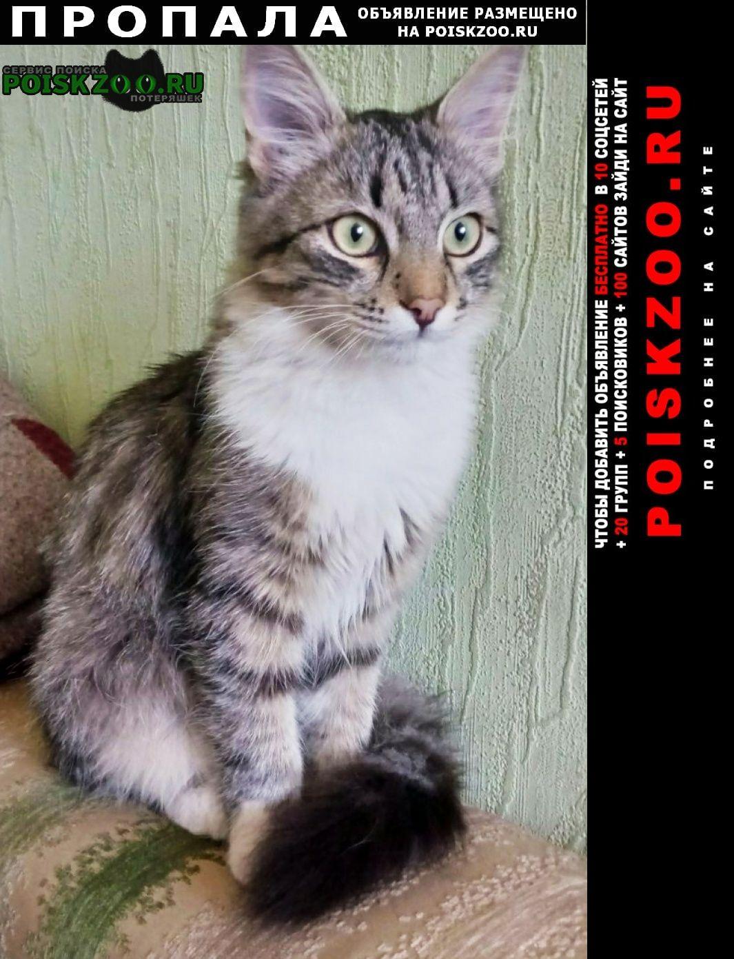 Луганск Пропала кошка