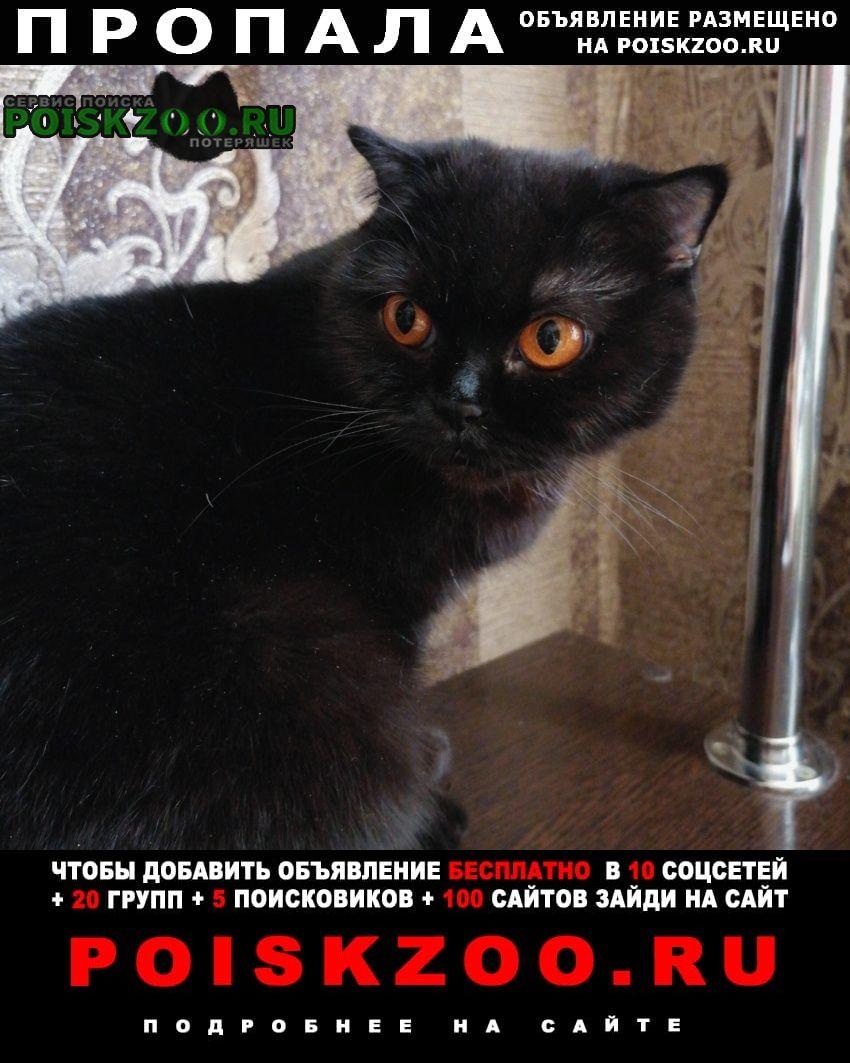 Пропала кошка на дачах романовское шоссе Волгодонск
