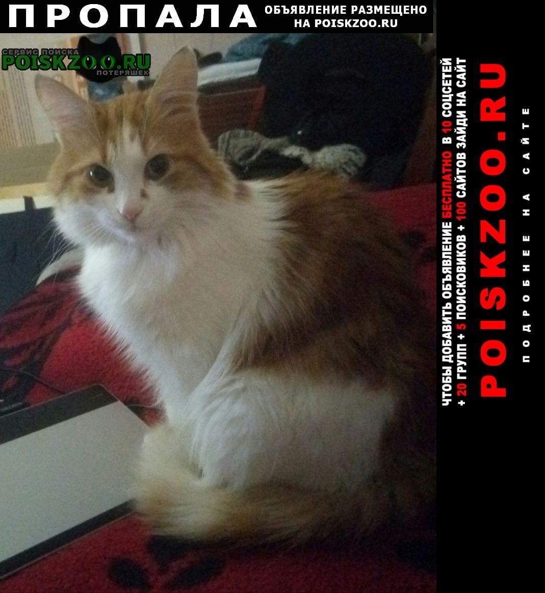 Батайск Пропала кошка сбежал кот