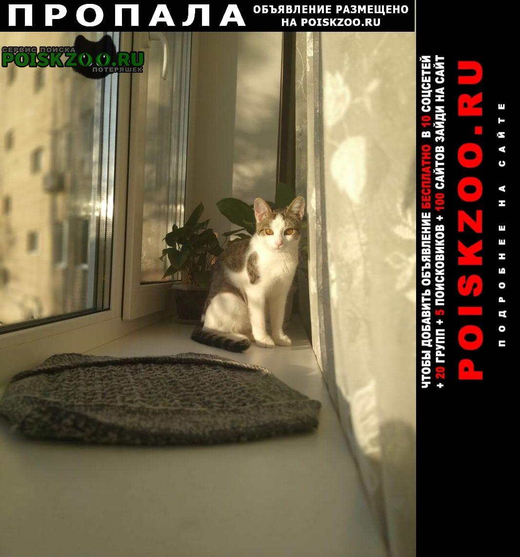 Саратов Пропала кошка домашняя .