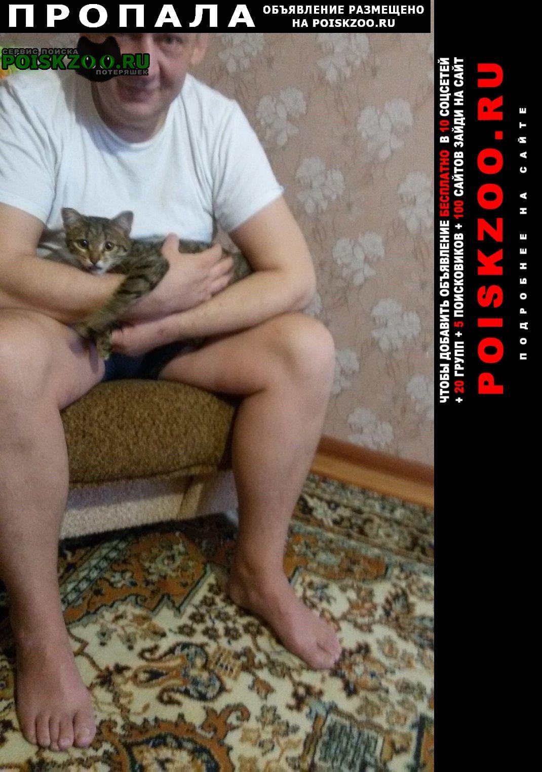 Пропала кошка Елабуга