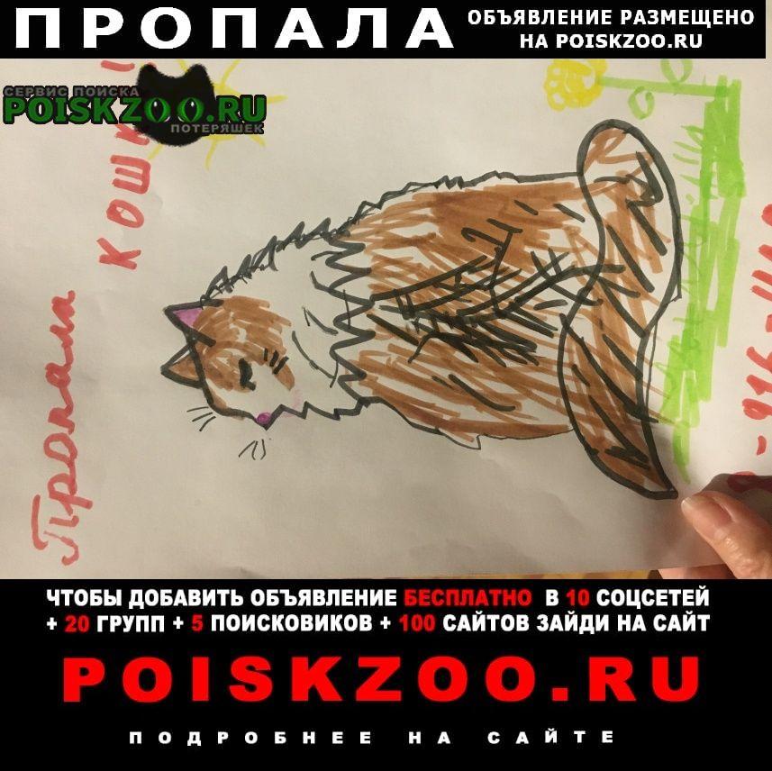 Раменское Пропала кошка