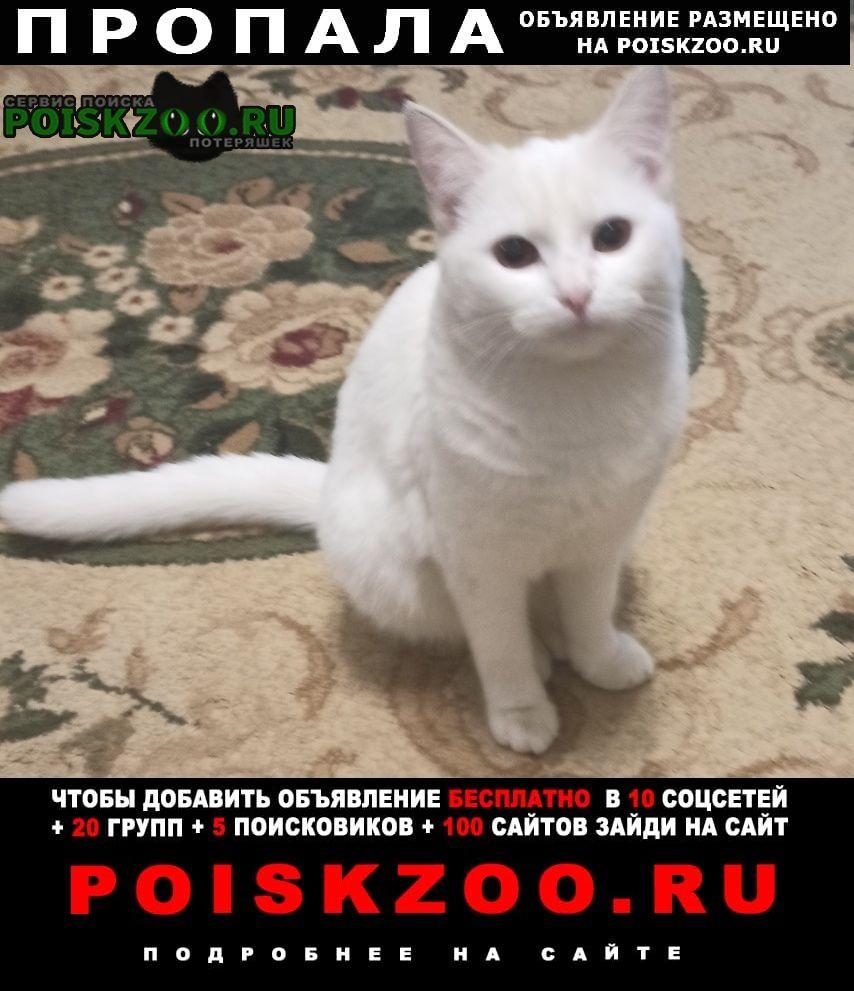 Пропала кошка Быково (Московская обл.)