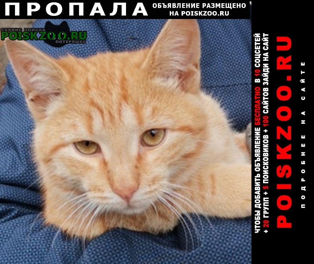 Нижний Новгород Пропала кошка рыжий кот.