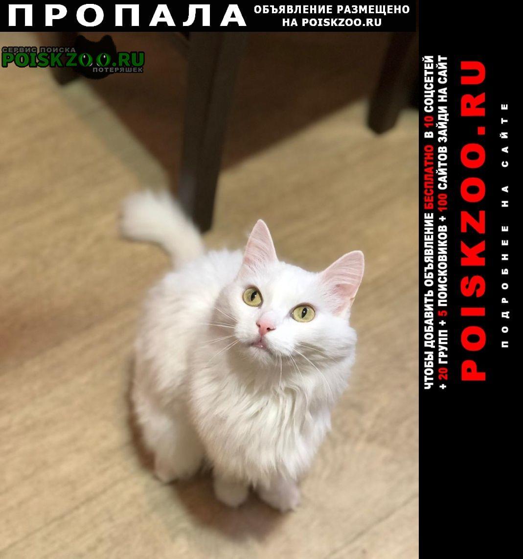 Пропал кот Рубцовск
