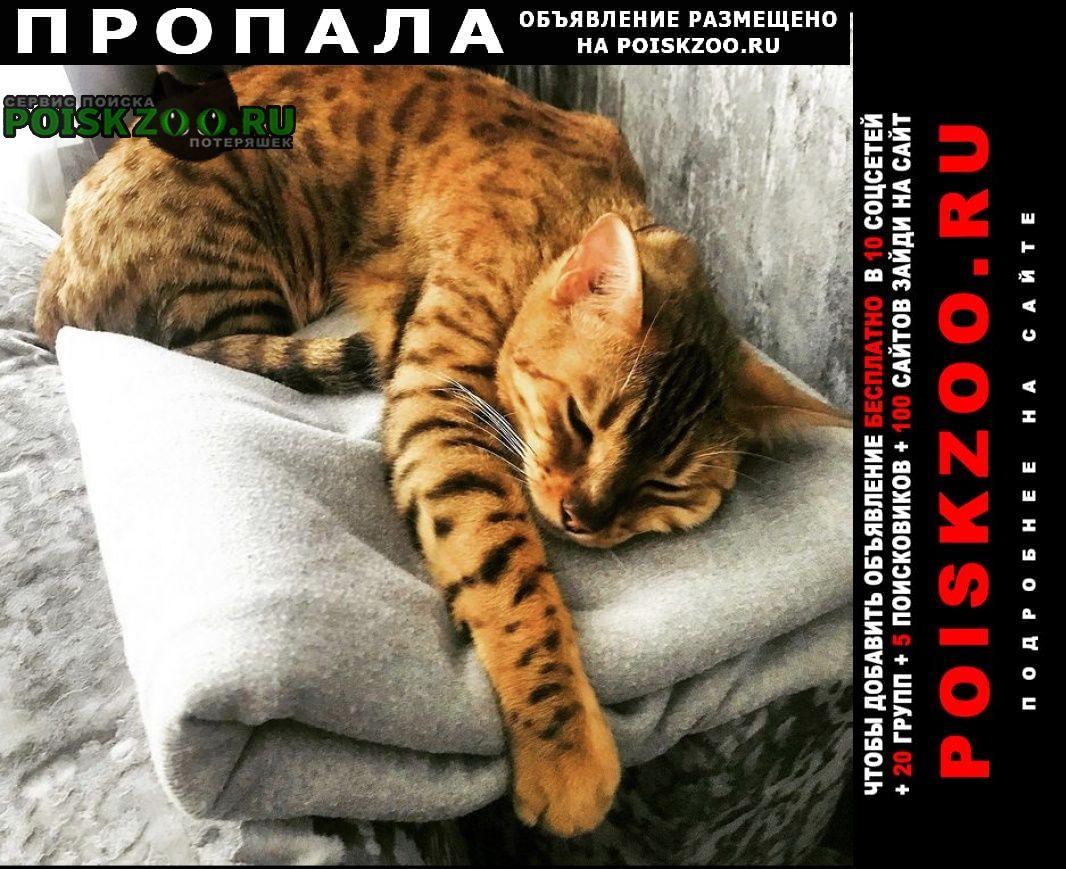 Набережные Челны Пропала кошка бенгальская.