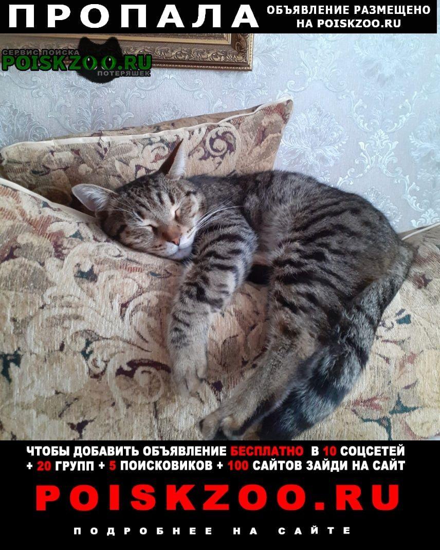 Пропала кошка кот Чебоксары