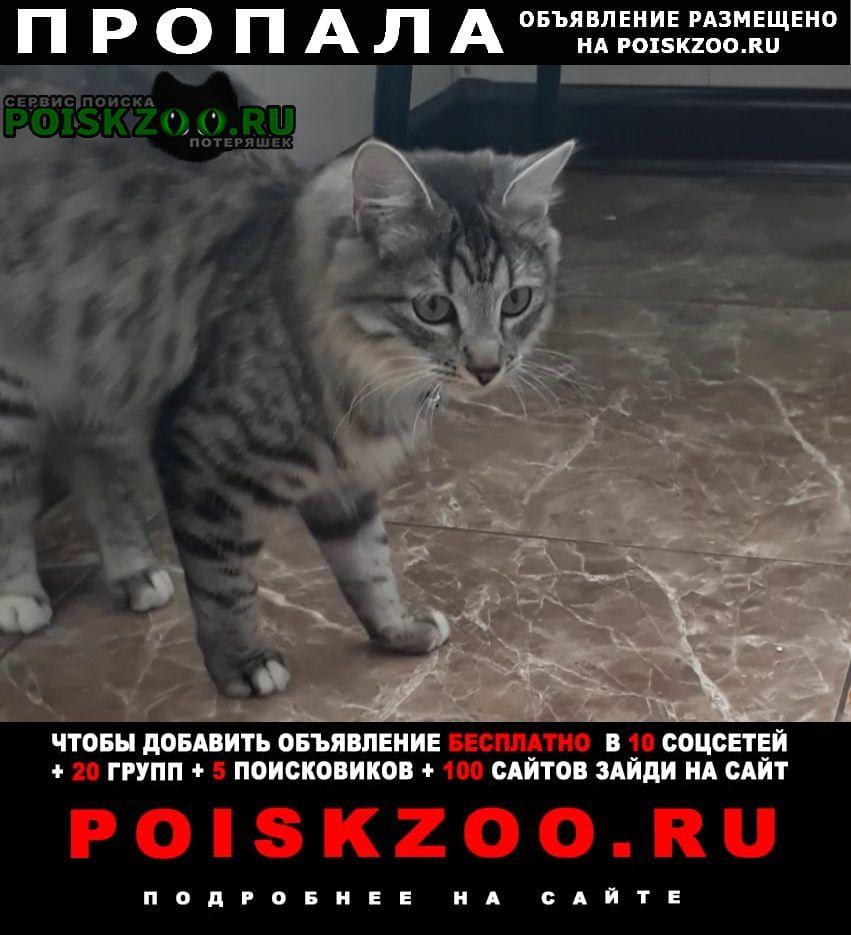 Пропала кошка м. первомайская Москва