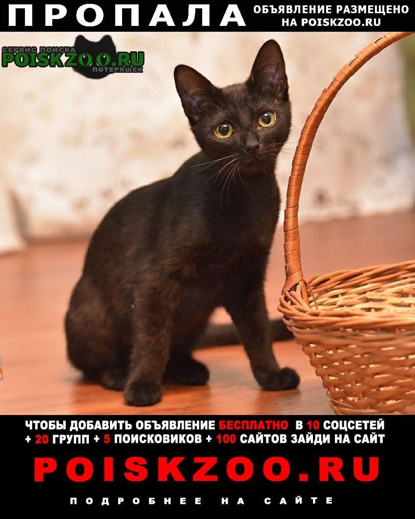 Пропала кошка черный котенок, мск, .. Москва