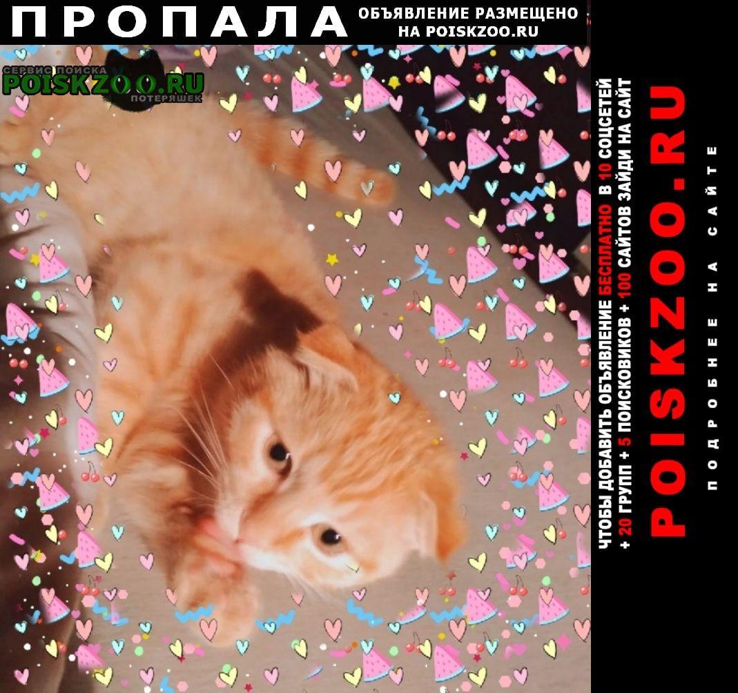 Пропала кошка помогите Нижний Новгород