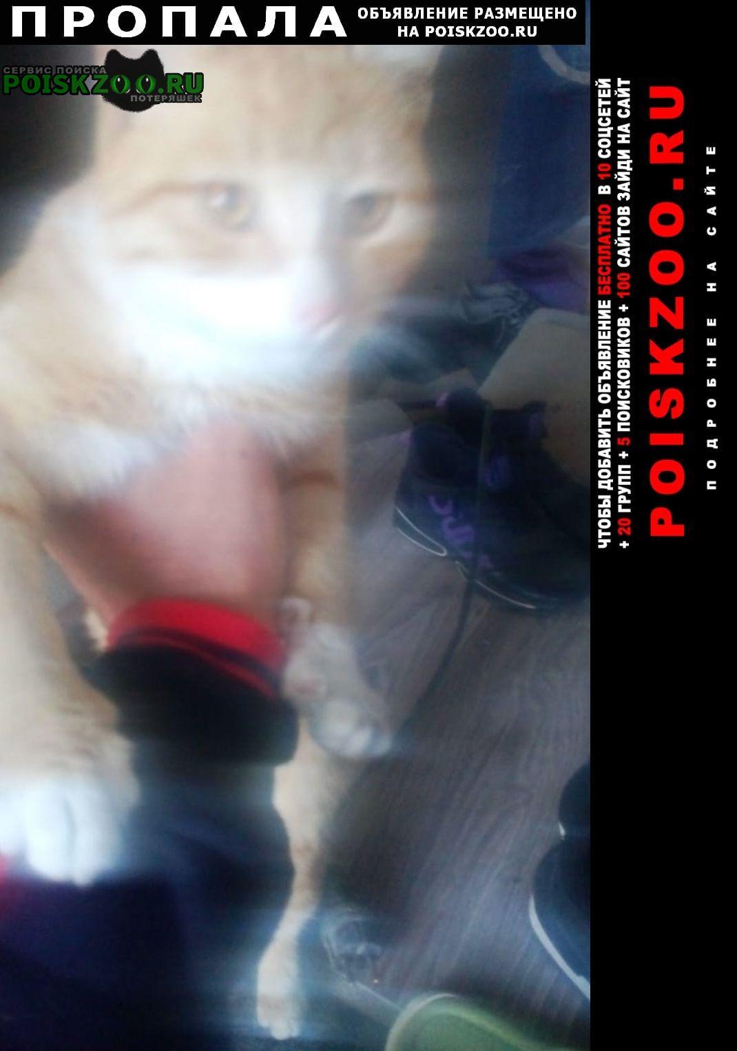 Пропал кот рыжий Железноводск(Ставропольский)