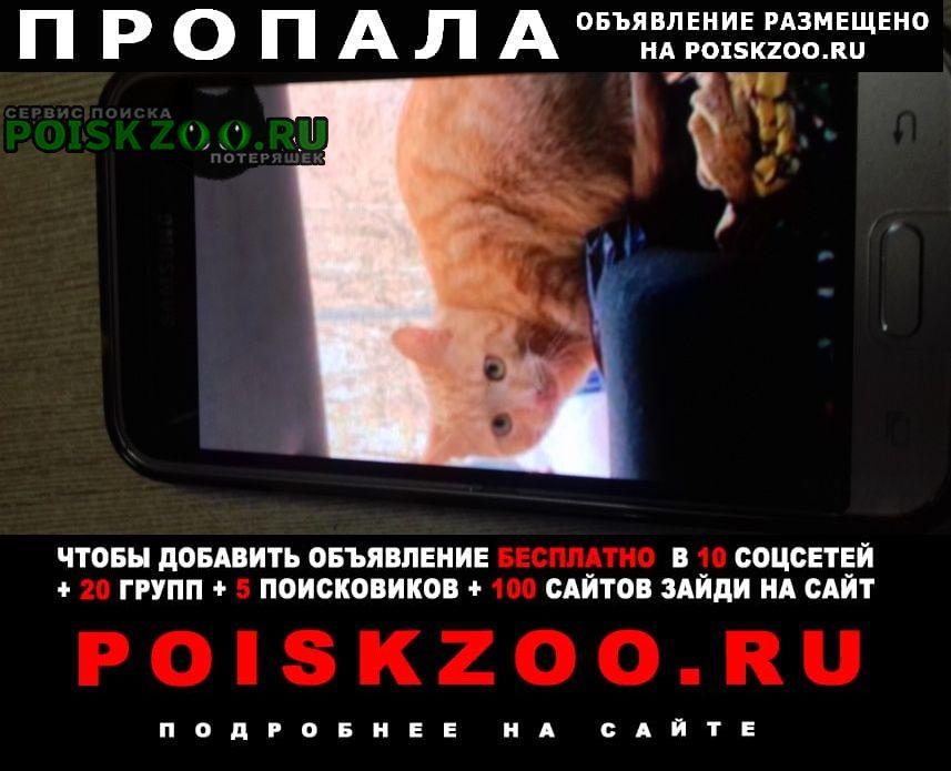 Пропала кошка кот рыжий, возраст 1 год Москва