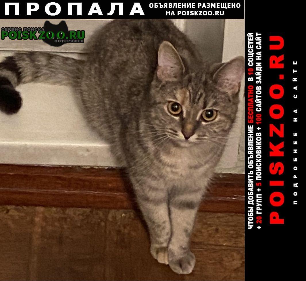 Пропала кошка срочно Нижний Новгород